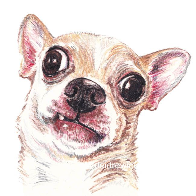 Crazy Eyed Chihuahua / Crayon art by Deidre Wicks