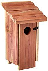 Free bluebird house plans with video instruction. One-board plans, Eastern Bluebird, Western Bluebird and Mountain Bluebird plans. House sparrow problems, more.