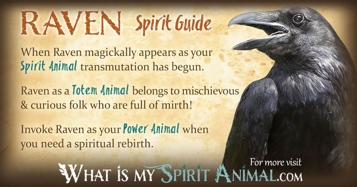 Learn about Raven as your Spirit, Totem, & Power Animal! Get the most in-depth description of Raven Symbolism & Meaning, too!