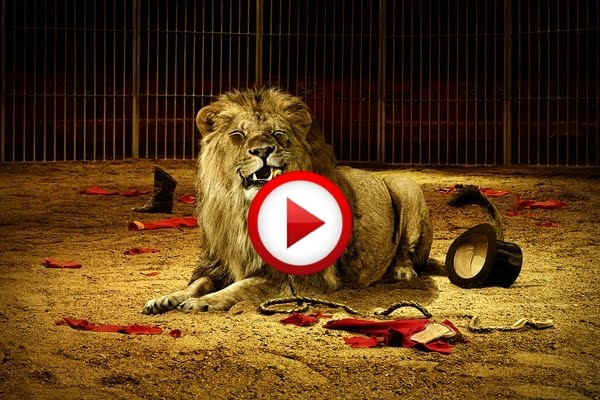 Shock Lion's Attack Video #accidents, #animals, #shock, #lions, #videos, #pinsland, https://apps.facebook.com/yangutu