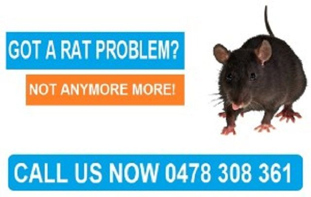 Right Pest Control  mice control Melbourne has been removing bee hives and infe