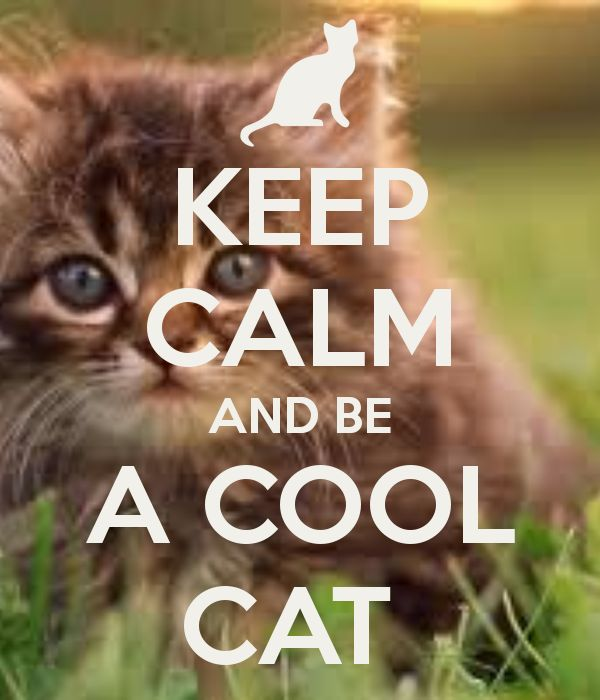 KEEP CALM AND BE A COOL CAT