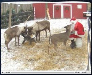 LIVE LOOK at SANTA on the Reindeer Cam! He feeds them twice daily..kids can watch!!