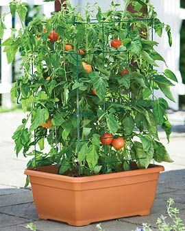 Urban or balcony gardening - these are a great idea!  Self-contained  - no drainage mess