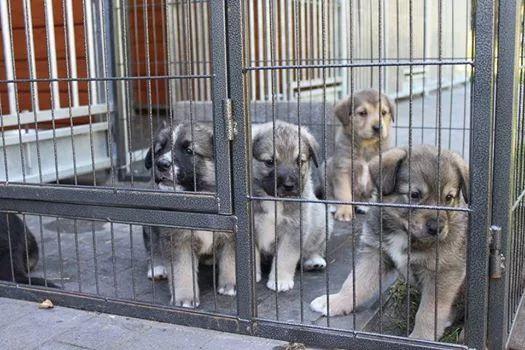 Wspaniała piątka ! szczeniaki szukają domów