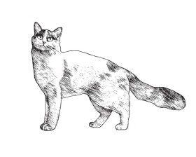 Турецкий ван - Породы кошек. Описание и фото домашних кошек. Популярные породы кошек в картинках - Glorypets