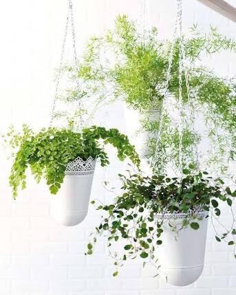 17 mejores ideas sobre plantas de jard n de sombra en - Plantas ikea naturales ...