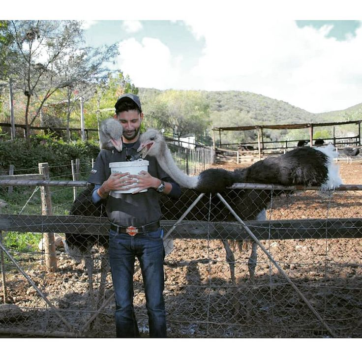 #TravelAdventurer, Abhishek Singh, spent some time in an ostrich farm during his South African adventure. Seems like the ostriches enjoyed his company quite a bit! #Throwback #GrabYourDream #travel #adventure #SouthAfrica #wanderlust #ostrichfarm