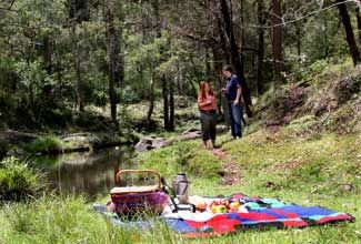 Goomburra Forest Retreat - possible winter camping location, pets and fires allowed