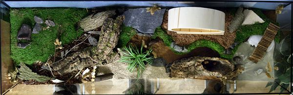 Hamster aquarium cage