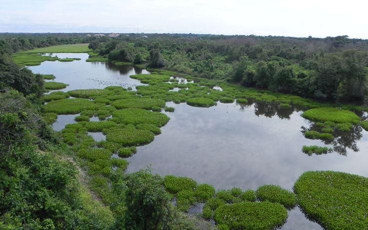 pantanal | Imagem do Pantanal na região de Mato Grosso. Devastação no bioma ...