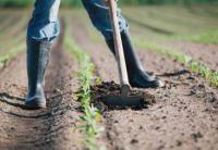 Salviamo il pianeta: abbasso l'insalata