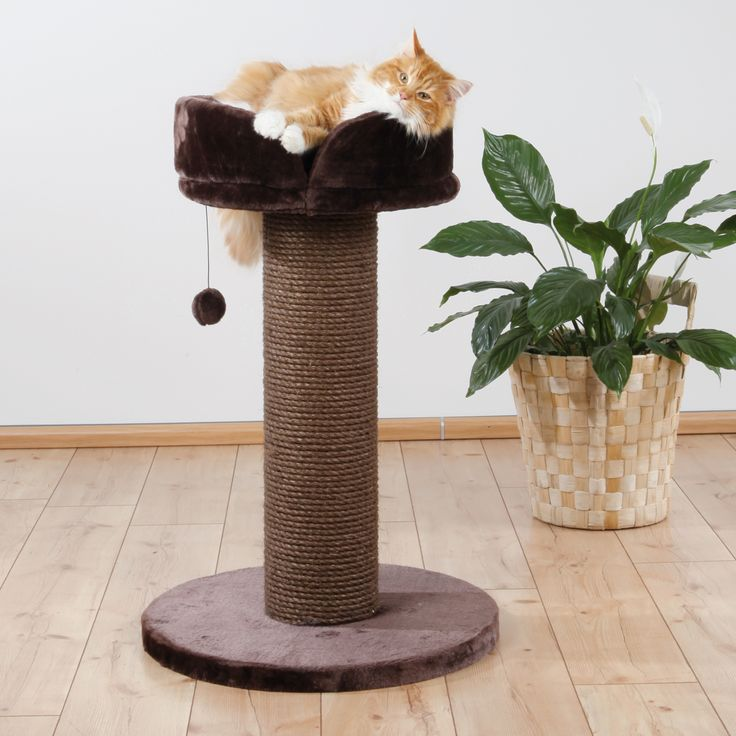 how to train a cat to use a scratching post