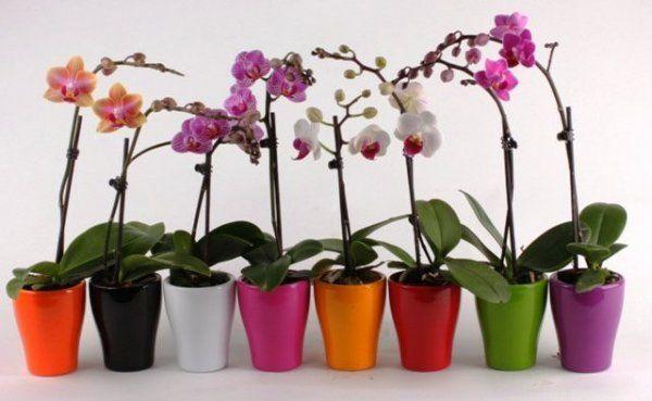 Орхидея — это любимый цветок многих цветоводов. Он считается очень требовательным. Однако многие орхидеи хорошо растут в доме и без особого ухода. Если ты хочешь, чтобы твое жилище превратилось в целую оранжерею с цветами, не нужно сильно тратиться. Мы подскажем тебе, как превратить 1 цветок в 100.