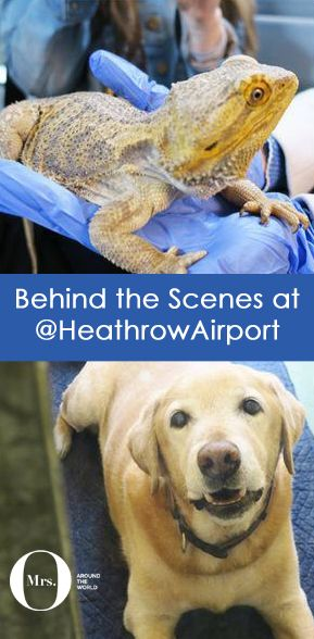 "I'm no stranger to Heathrow Airport. I'm a ""Heathrower"" and, more specifically, a ""T-Fiver"", and I may even be a little bit in love with this airport. So when Heathrow's team invited yours truly for a day behind the scenes, I couldn't resist!"