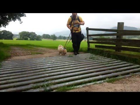 [VIDEO] Tizer the Lhasa Apso Crossing a Cattle Grid https://www.youtube.com/watch?v=Bxi91A7TOEQ