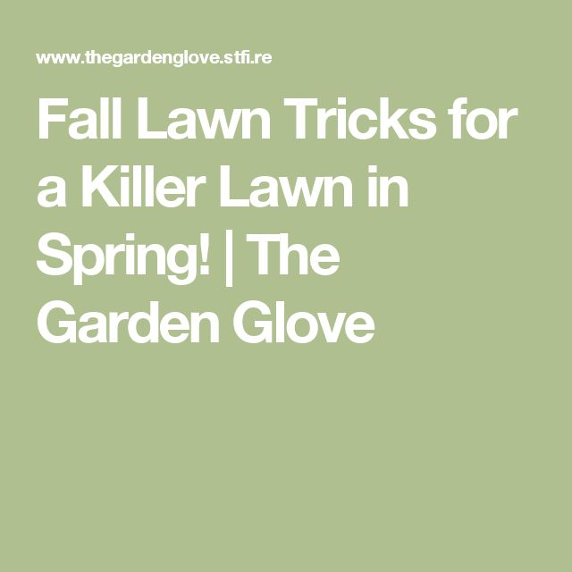 Fall Lawn Tricks for a Killer Lawn in Spring!   The Garden Glove