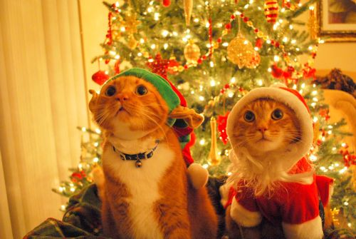 the owner of these two kitties is obviously a single lady. merry christmas!