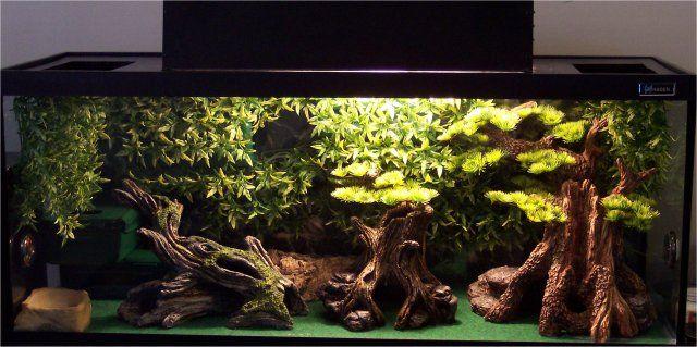 the 25 best gecko terrarium ideas on pinterest reptile enclosure reptile terrarium and. Black Bedroom Furniture Sets. Home Design Ideas