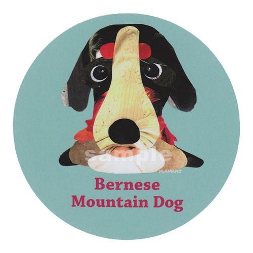 バーニーズ マウンテン ドッグ, Bernese Mountain Dog