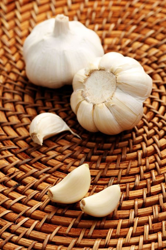 Garlic is used the world over as a culinary spice, but recent research indicates that among its 100  medicinal properties it is far safer and more effective than a commonly used chelation drug in pulling lead out of the human body.