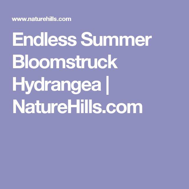 Endless Summer Bloomstruck Hydrangea | NatureHills.com