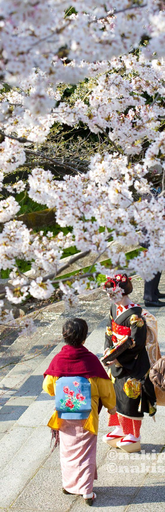 Japan Cherry blossoms: Photo by NAKISURF: Blossoms Sakura, Japan Cherries Blossoms, Cherries Trees, Japanese Cherries Blossoms, Beautiful Pictures, Japan Gardens, Kyoto Japan, Sakura Trees Japan Cherries, Japan Travel
