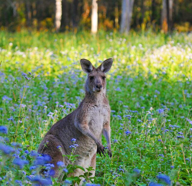 Coombabah Lakelands Reserve #VisitGoldCoast