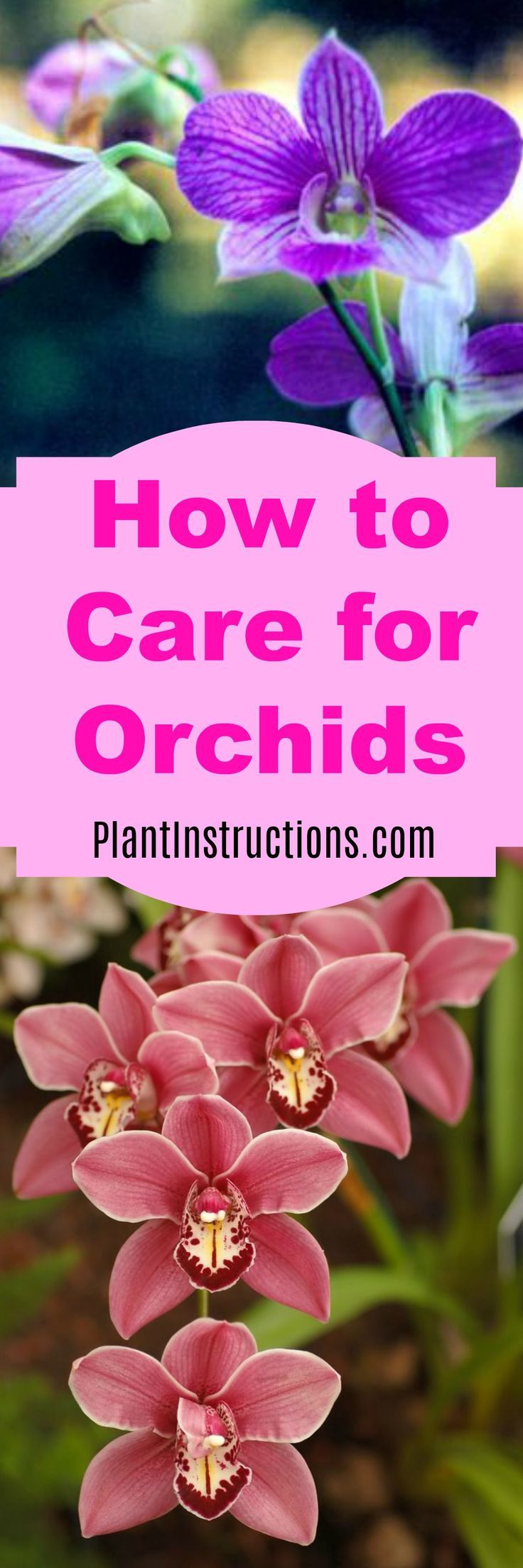 How to Care for Orchids | Plant Instructions