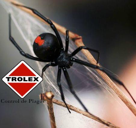La viuda negra es uno de los mas temidos de los tipos de arañas en todo el mundo y por una buena razon. Se dice que la mordedura de la viuda negra tiene una potencia de veneno que es 15 veces mas fuerte que la de la serpiente de cascabel, existen miles de especies de arañas pero esta es muy reconocida