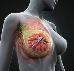 Women in China Rarely Get Breast Cancer