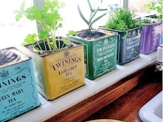 Cute idea for growing herbs in the kitchen