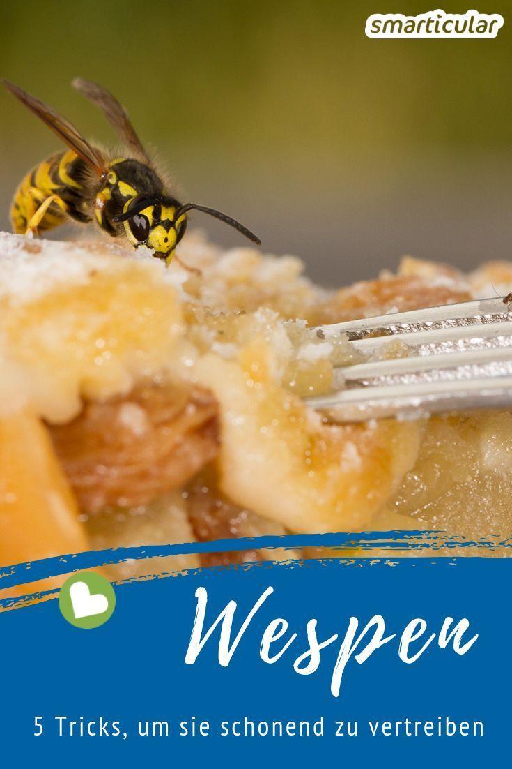 Wespen Fernhalten Effektiv Und Schonend Mit Diesen Tricks Wespen Vertreiben Wespen Fernhalten Wespe