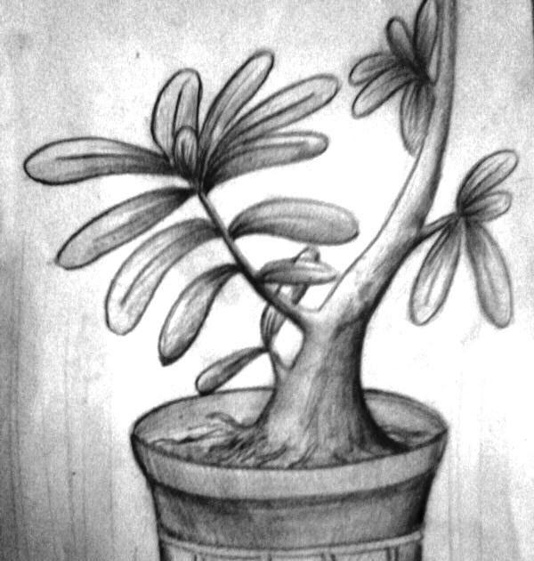 Menakjubkan 30 Sketsa Lukisan Bunga Kamboja Di 2020 Sketsa
