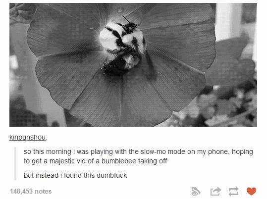 Big ol' dumb bee: | 32 Of The Greatest Things That Have Ever Happened On Tumblr