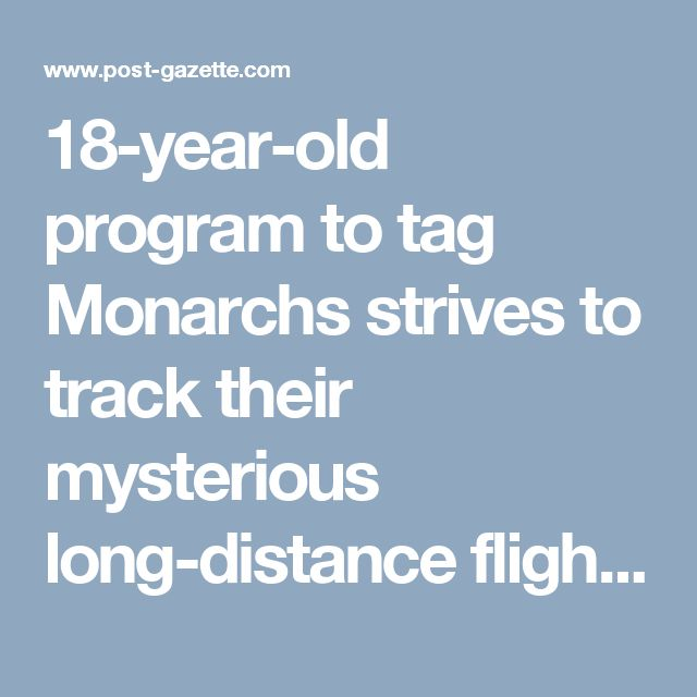 18-year-old program to tag Monarchs strives to track their mysterious long-distance flights - Pittsburgh Post-Gazette
