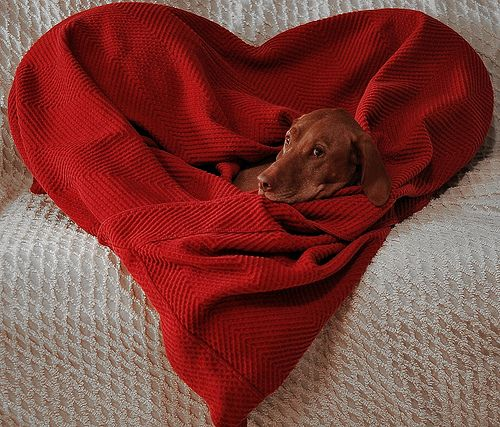 1201 best images about VIZSLA!.... (Is there ANY other ...