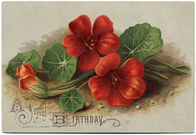 A strikingly lovely vintage birthday postcard featuring elegant red flowers.