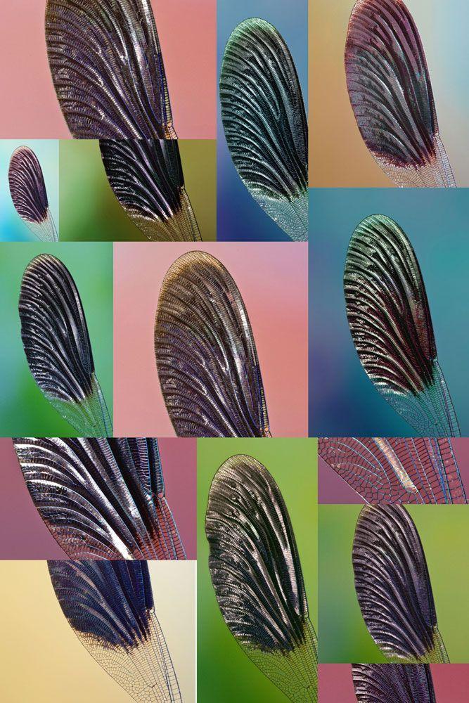 wings and lighting atmospheres