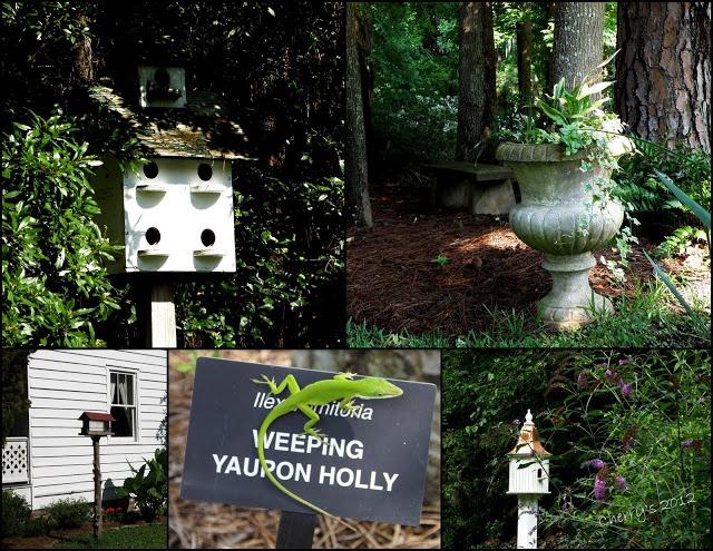 20 Best Savannah Botanical Garden Images On Pinterest Botanical Gardens Savannah Georgia And