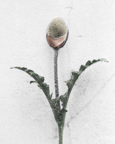 gallery-bloom18 | lidewij edelkoort