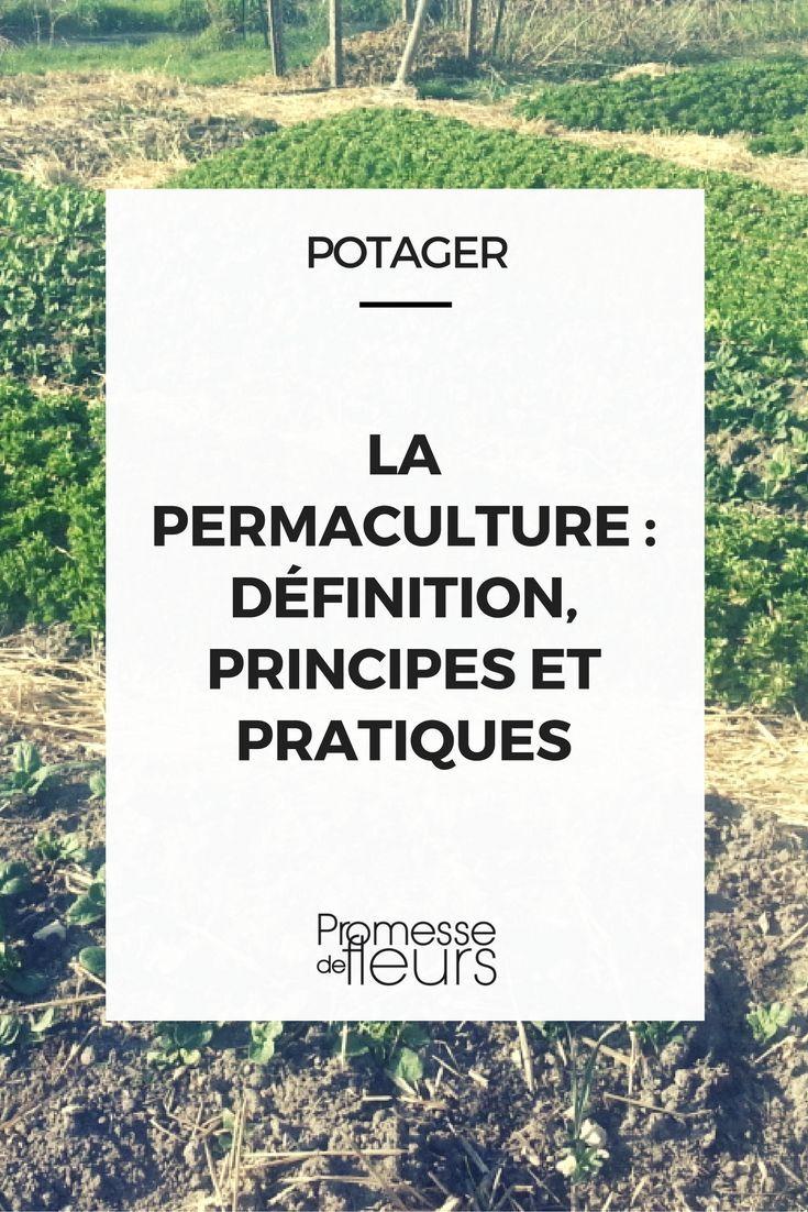 Connaissez-vous la permaculture ? Découvrez ce dont il s'agit, les principes et les pratiques à mettre en oeuvre au potager