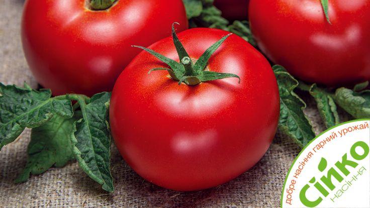Насіння помідорів Сійко.