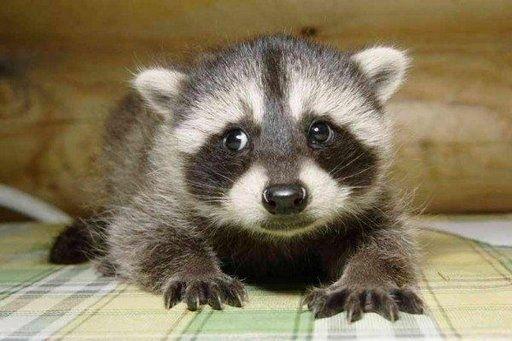 sad face | BABY ANIMALS | Pinterest