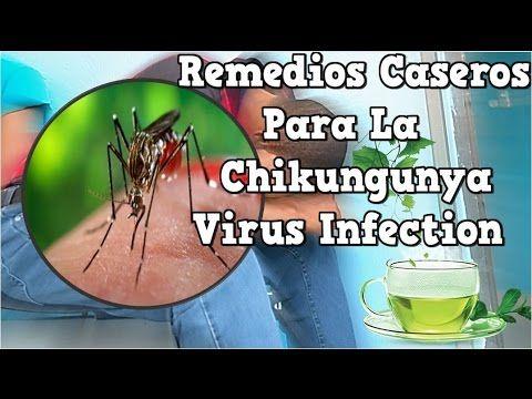 Remedios Caseros Para La Chikungunya Virus InfectionRemedios Caseros Para El Chikungunya En Adultos Hola amigos de la chikungunya se dice que es transmitida por un mosquito un zancudo que ya esté infectado el virus puede dar de muchas maneras lo común es que la persona que es contagiada presente los síntomas a los días puede ser entre tres y siete días.  Normalmente se presenta fiebre erupción cutánea dolores musculares y en las articulaciones algunas personas presentan vómitos y diarrea…