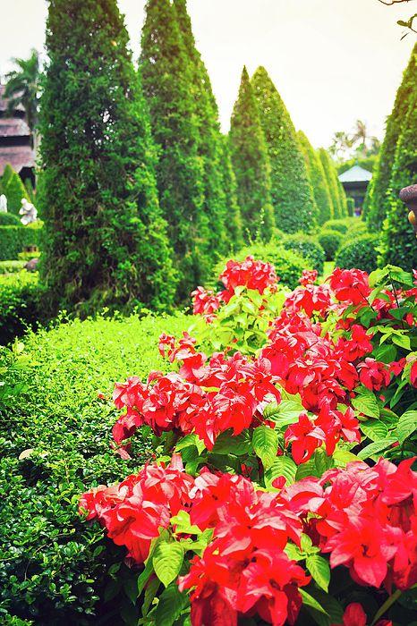 Red Flowers In A Tropical Garden Photograph by Nadezhda Tikhaia   #NadezhdaTikhaiaFineArtPhotography #ArtForHome #HomeDecor #Flowers #InteriorDesign #FineArtPrints