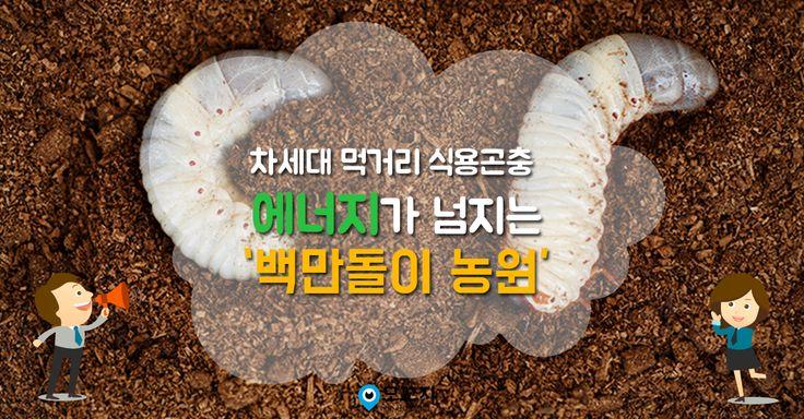 차세대 먹거리 식용곤충  '꽃벵이' 를 키우는  에너지 넘치는 '백만돌이 농원'에 다녀왔습니다.  #농촌진흥청 #쵸니블로그 #백만돌이농원 #꽃벵이 #굼벵이
