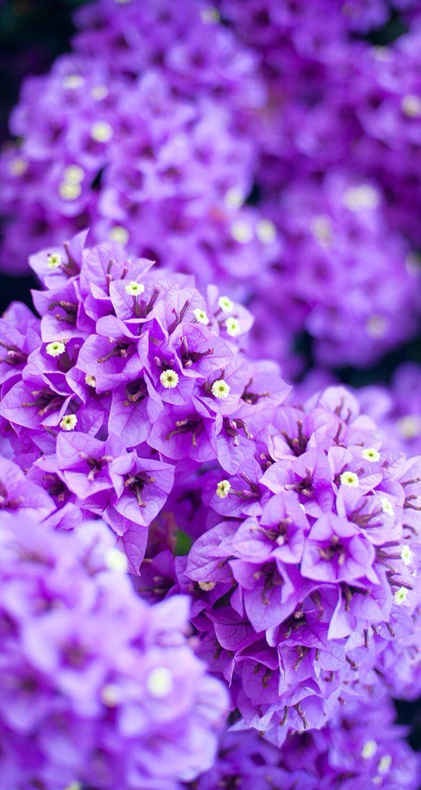 Nature Wallpaper Iphone Flowers Purple Wallpaper Nature Flowers Iphone Wallpaper Violet Iphone Wallpaper Purple Flower