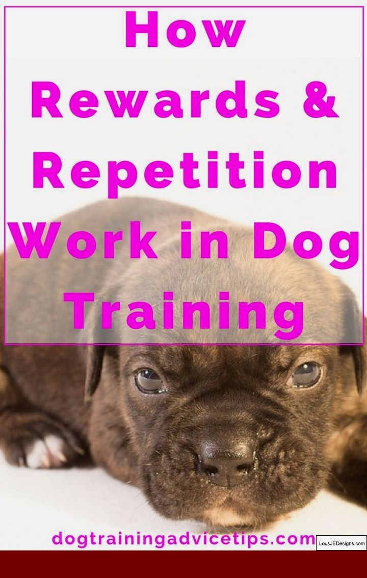 Training Tips To Stop Dog Aggression And Pics Of Best Way To Train
