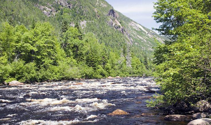 Saumon Québec site sur la pêche au saumon